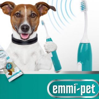 Dog hygiene is worth investing in. At Mrs b's dog grooming our teeth cleaning is in demand as the results after a few treatments is amazing 🦷🐶x #emmipet #doggroomerslife #dogs