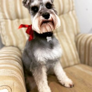 """I know I'm pretty"" Jasmine looking cute after her groom 🐶🐾✂️x #doggrooming #doggroominglife #doggroomersofinstagram"
